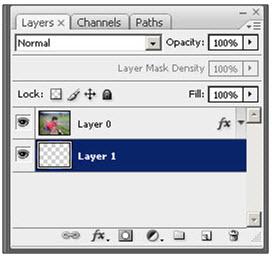 Pastikan layer baru (Layer 1) yang kita buat berada di bawah Layer 0 (layer yang ada foto-nya), caranya drag/tahan mouse komputer sambil arahkan Layer 1 ke bawah Layer 0.
