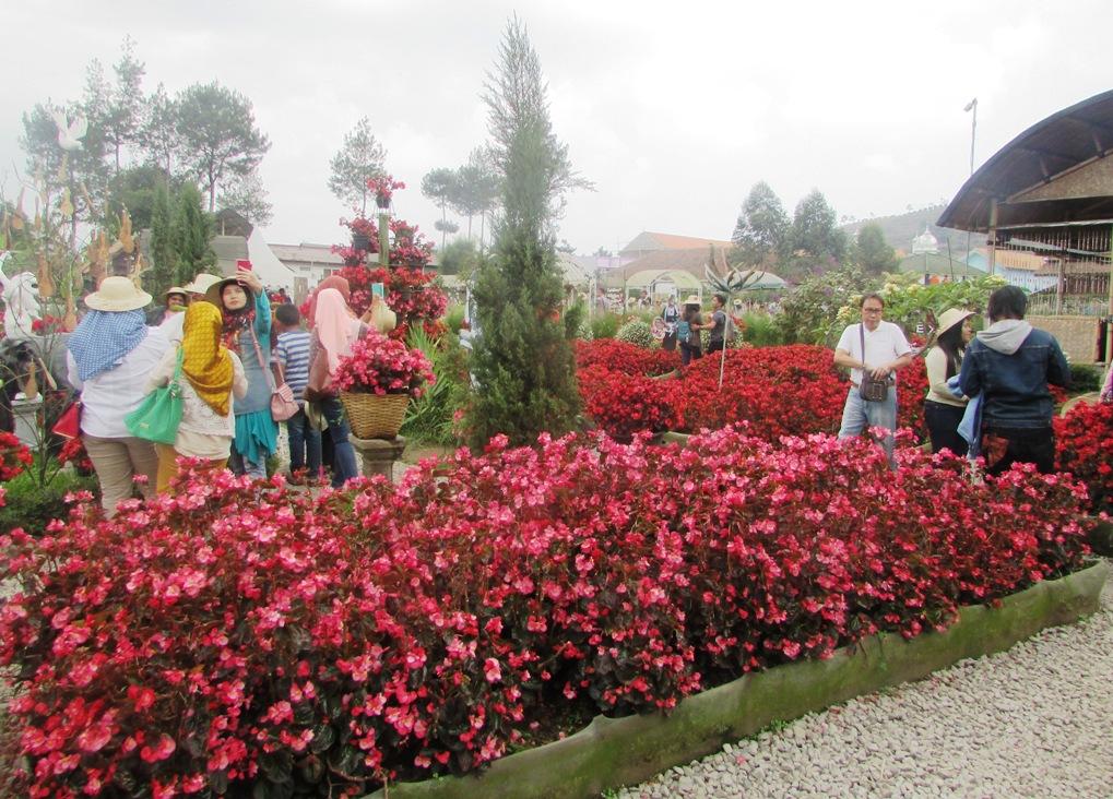 Hamparan Bunga Dan Patung Yang Random Di Kebun Begonia Take And Share